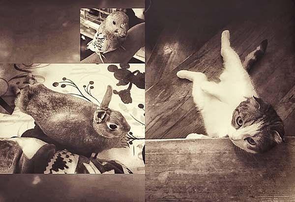 #ペットのいる生活 #平和エステート 仙台市太白区のペット可のお部屋