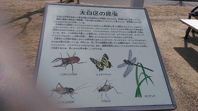 昆虫案内図