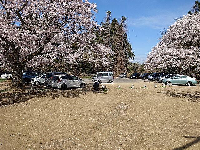 駐車場 お花見の時期は込み合います