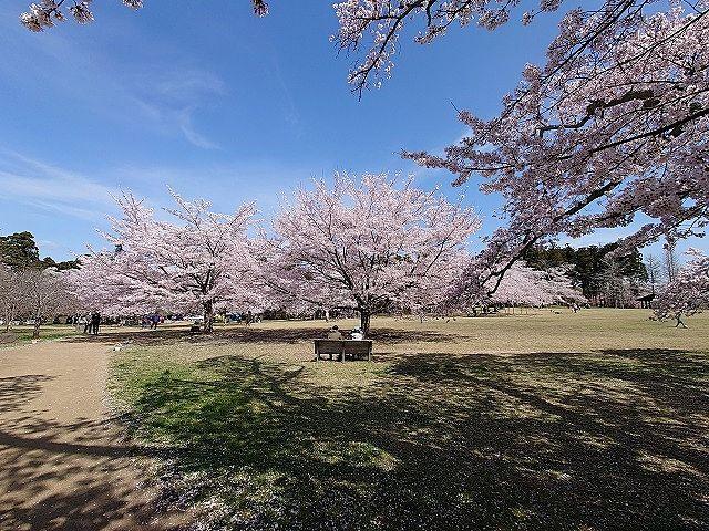 桜の名所 三神峯公園に行こう!